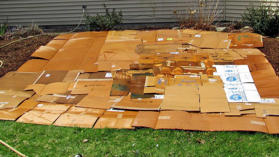 Deshalb solltest du Pappkartons in den Garten legen