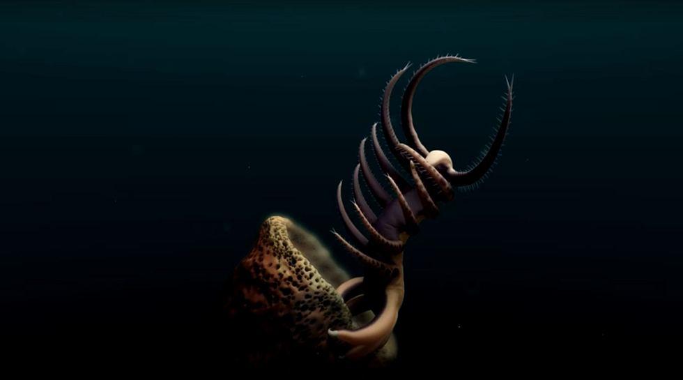 Forscher entdecken 500 Millionen Jahre alte Tiefsee-Kreatur