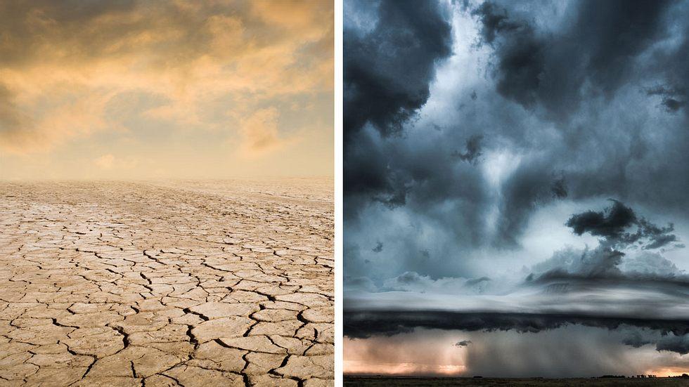 Wissenschaftler prognostizieren Ende der Menschheit