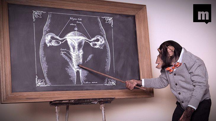 Diese 10 Dinge über Vaginas sollte jeder Mann kennen