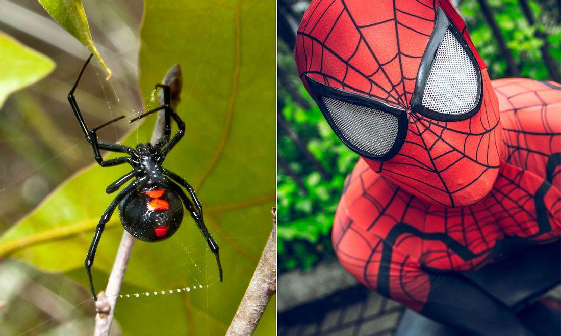 Schwarze Witwe, Spiderman