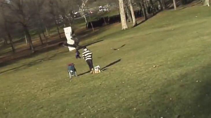 Unglaublich: Adler schnappt sich Kind im Park