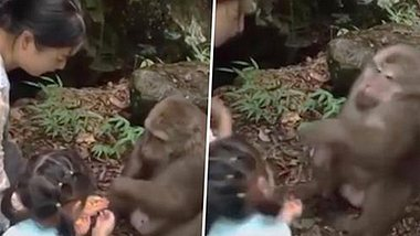 Mädchen ärgert Affen - der schlägt einfach zu
