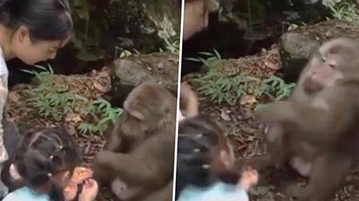 Affe aus chinesischem Zoo schlägt kleines Mädchen