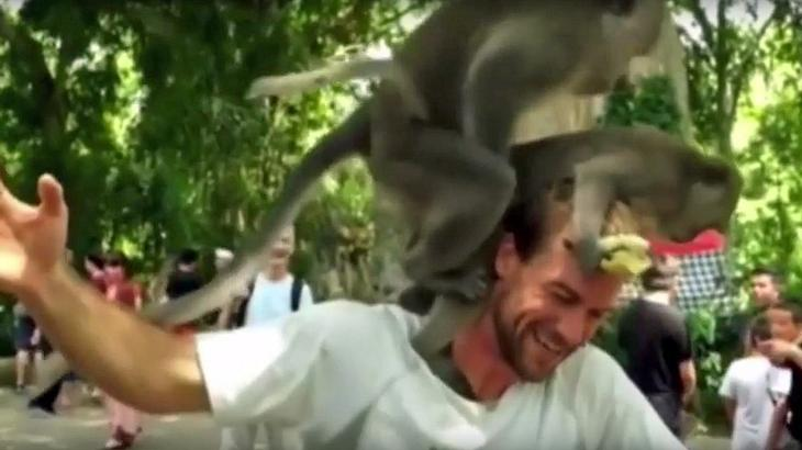 Zwei Affen haben Sex auf dem Kopf eines Touristen