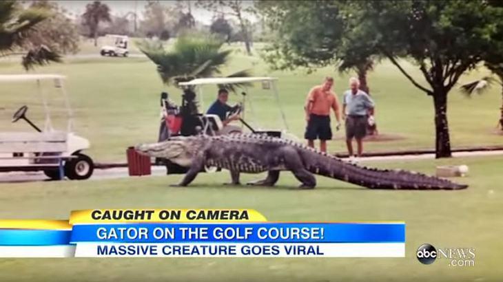Ein Riesen-Alligator spazierte über den Rasen eines Golfclubs in Florida