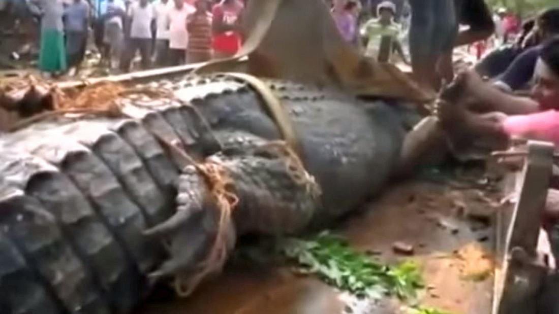 Männer haben auf Sri Lanka ein fünf Meter großes Krokodil entdeckt
