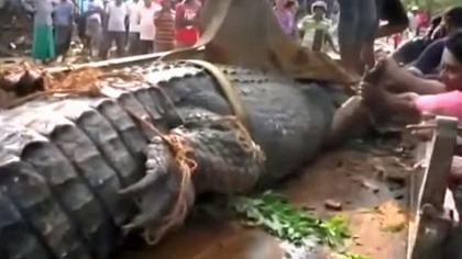 Männer haben auf Sri Lanka ein fünf Meter großes Krokodil entdeckt - Foto: YouTube/jojo
