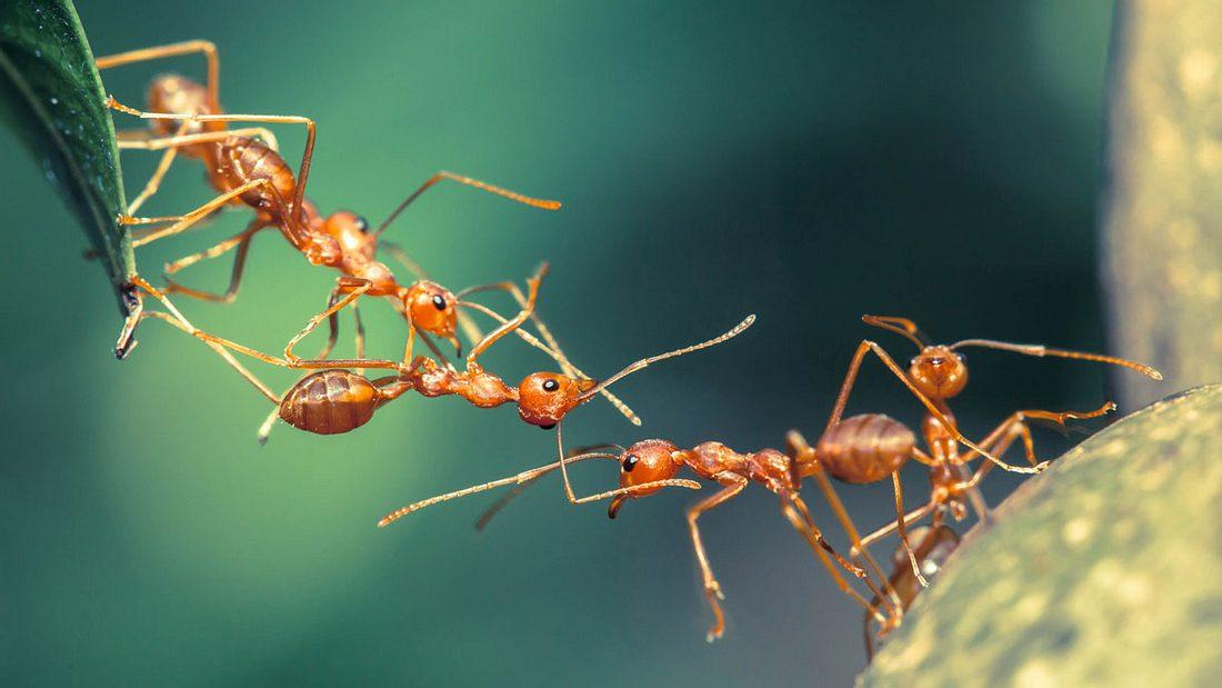 Hausmittel gegen Ameisen: So wirst du das Ungeziefer schnell und einfach los