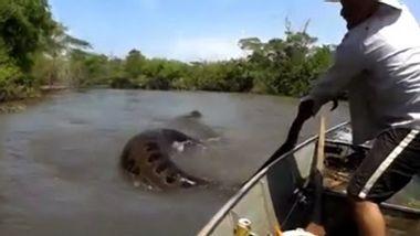 Weltrekord? Brasilianische Fischer entdecken gigantische Anakonda