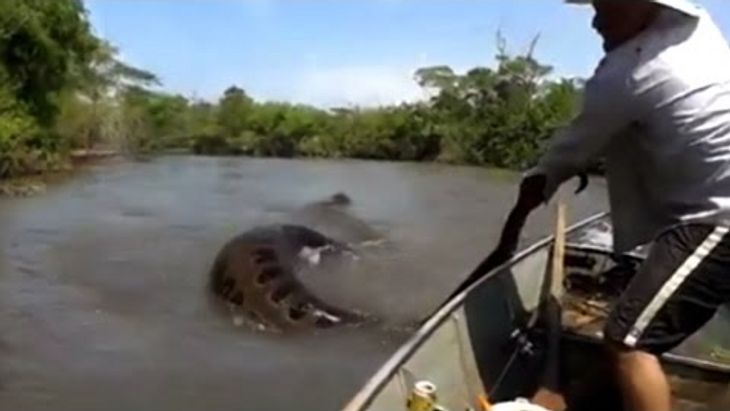 Keine gute Idee: Ein Fischer versucht, eine riesige Anakonda aus dem Wasser zu ziehen