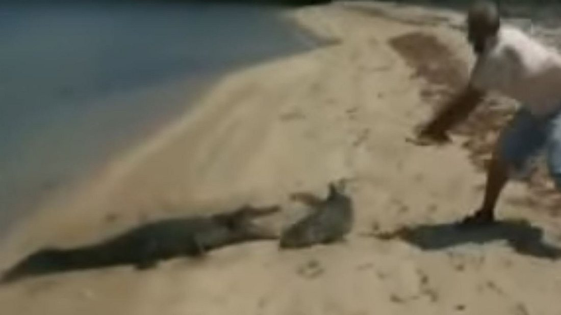Angler fängt Hai, dann will hungriges Krokodil Beute schnappen