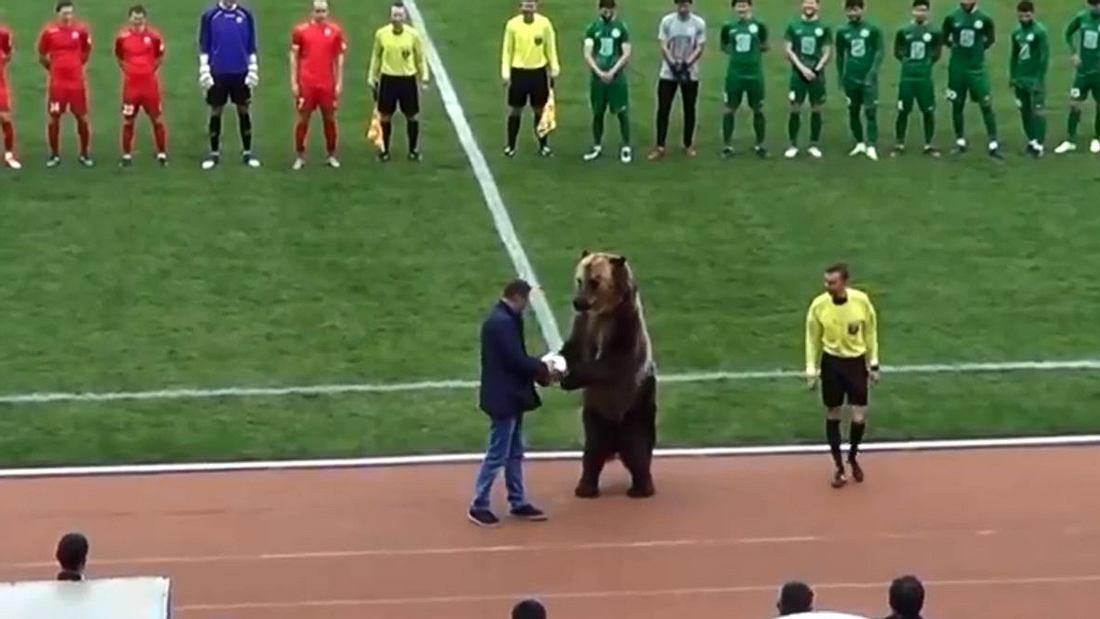 WM 2018: Russland will Bären als Balljungen einsetzen