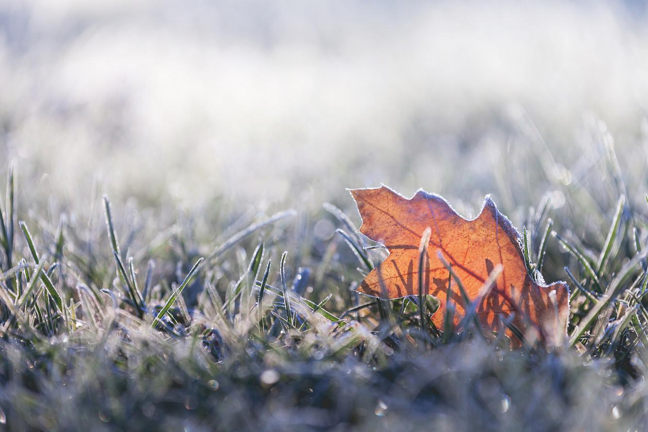 Blatt auf frostigem Boden