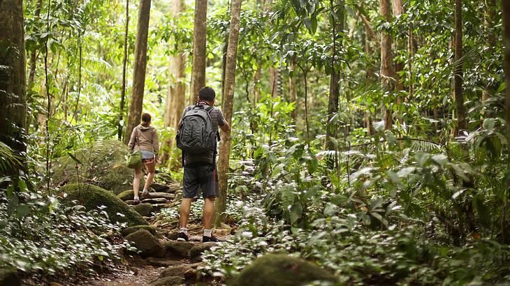 Belanglo State Forest: Der gefährlichste Nationalpark der Welt