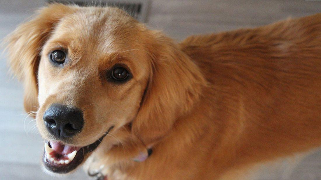 Die beliebtesten deutschen Hunde