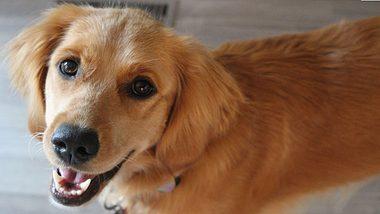 Die beliebtesten deutschen Hunde - Foto: iStock / KalebKroetsch