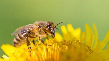 4 erstaunliche Fakten zum Thema Bienen