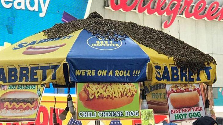 Bienen ließen sich an einem Hot-Dog-Stand nieder