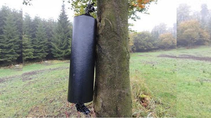Brutallus 9999: Polenböller sprengt Baum