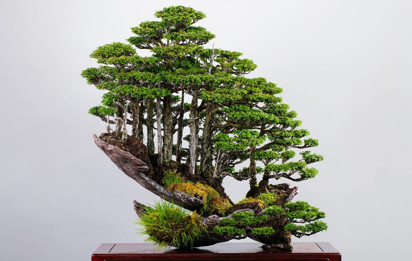Bonsai-Meisterwerk von Masahiko Kimura