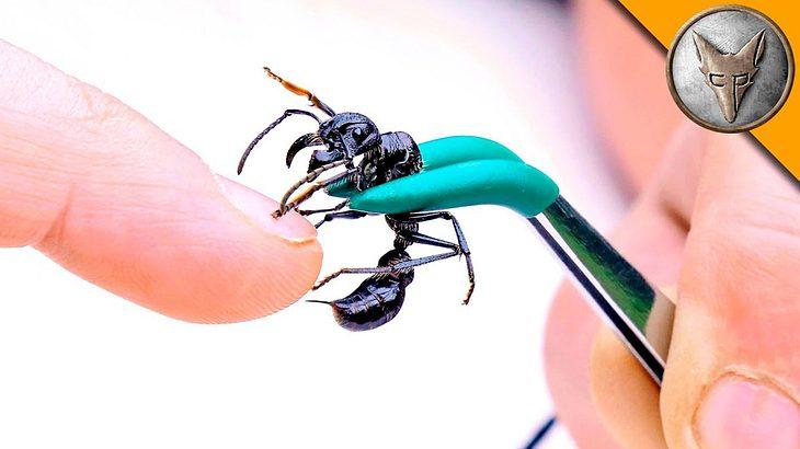 Ein Biss der Bullet-Ant gehört zu den schmerzhaftesten Erfahrungen - Coyote Peterson hat es getestet