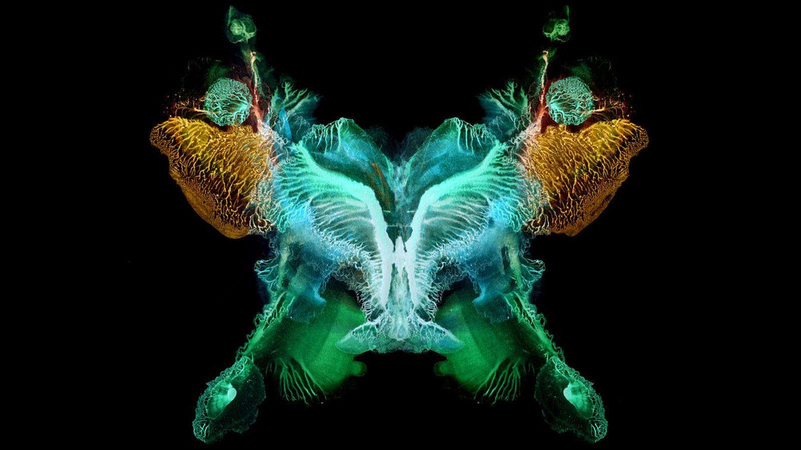 Der Butterfly Effekt: Unheimliche Zufälle der Geschichte