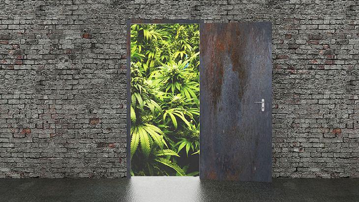 Cannabis illegal in der Wohnung