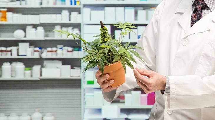 In Köln könnte es schon bald Cannabis in Apotheken geben