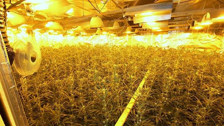 Polizei Bremen: Rekord-Fund bei Zugriff auf Cannabis-Plantage