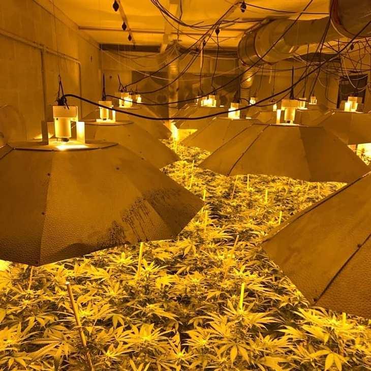 Englische Polizisten haben in Wiltshire eine Cannabis-Fabrik in einem Atombunker entdeckt
