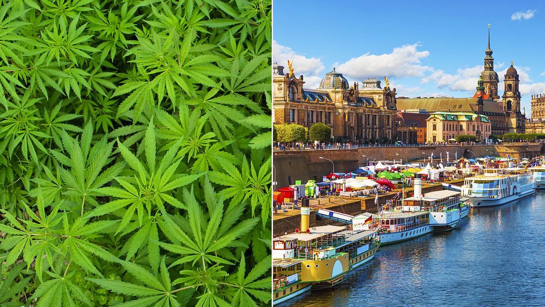 Cannabis-Anbau bald in Dresden (Collage)