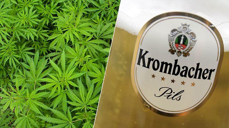 Krombacher-Chef macht jetzt in Cannabis