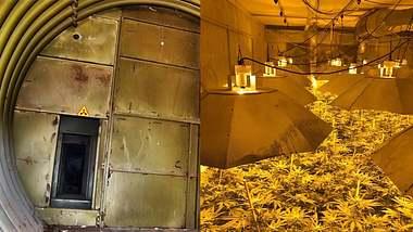Polizei entdeckt riesige Cannabis-Fabrik in geheimem Atombunker