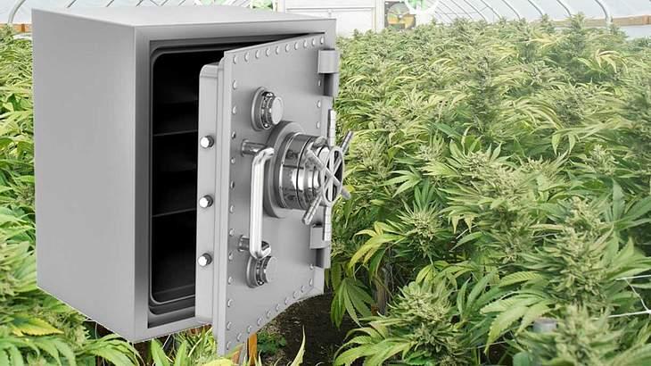 Cannabis-Tresor