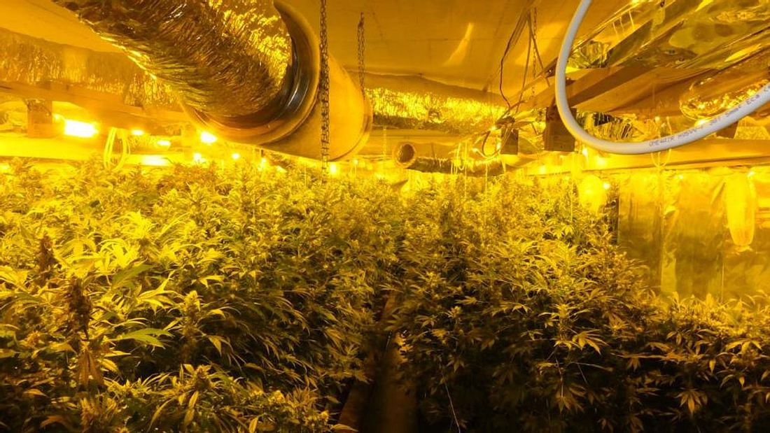 Cannabis-Farm in Kiel entdeckt.