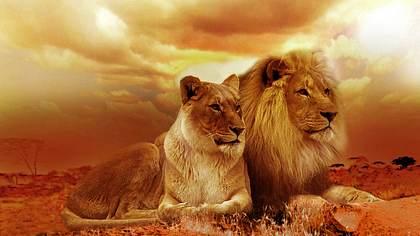 Sohn des größten Löwen Afrikas von Wildjägern erschossen - Foto: Pixabay / Sponchia