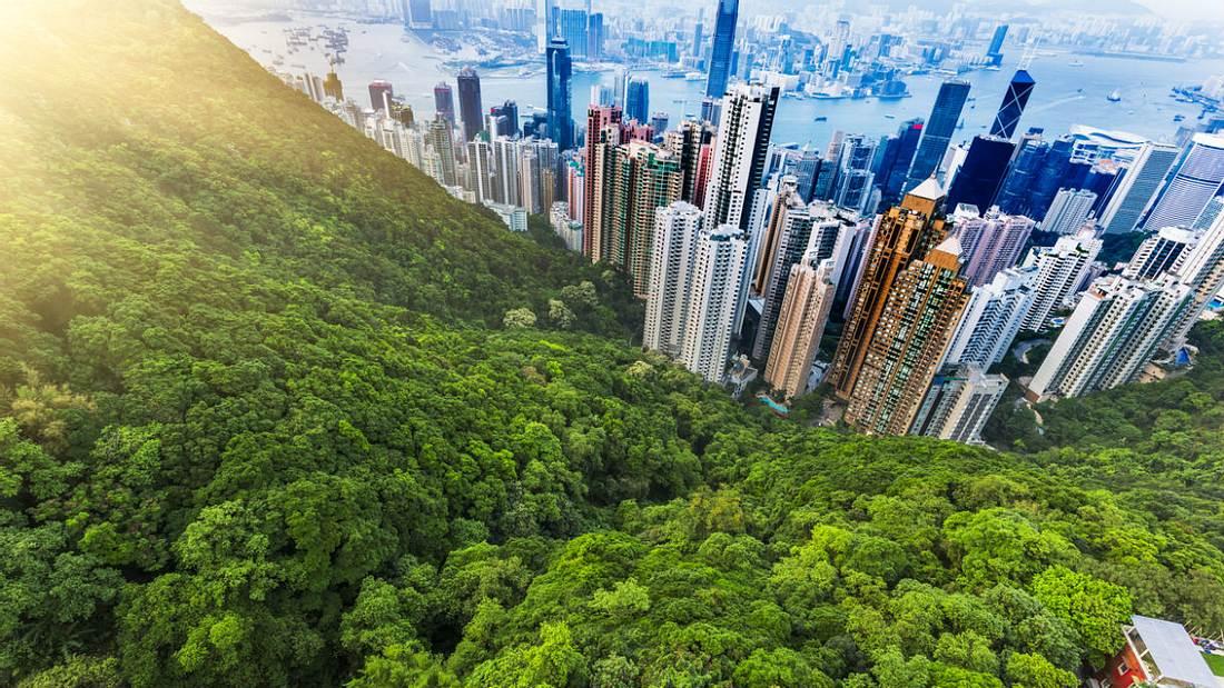 China plant Anbau von Wäldern in der Größe von Irland