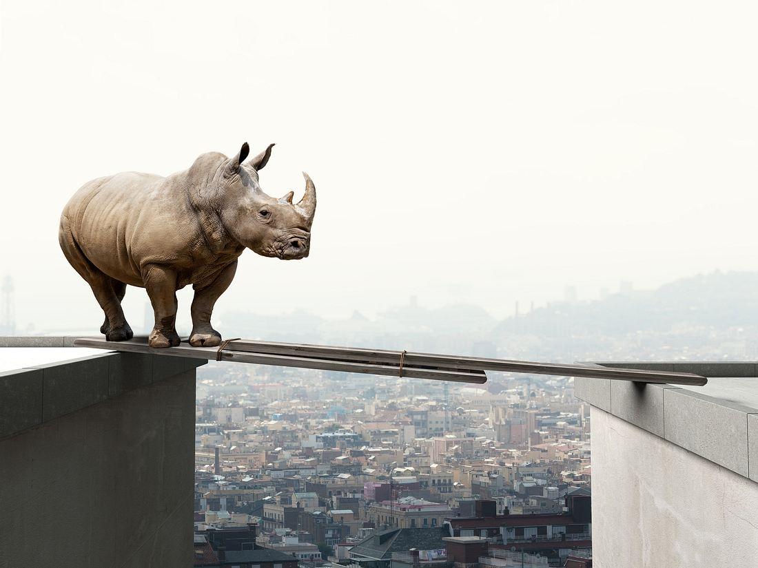 Nashorn über den Dächern einer Stadt