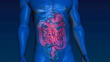 Gift ade. Mit nur 2 Zutaten holst du bis zu 7 Kilo Darmreste aus deinem Körper