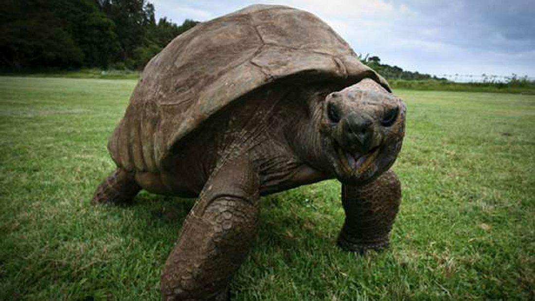 Jonathan, das älteste lebende Tier der Welt