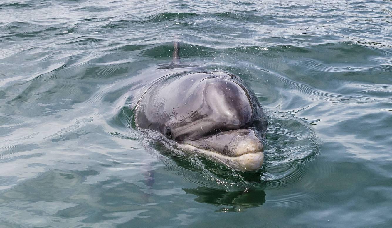 Delfin Fungie