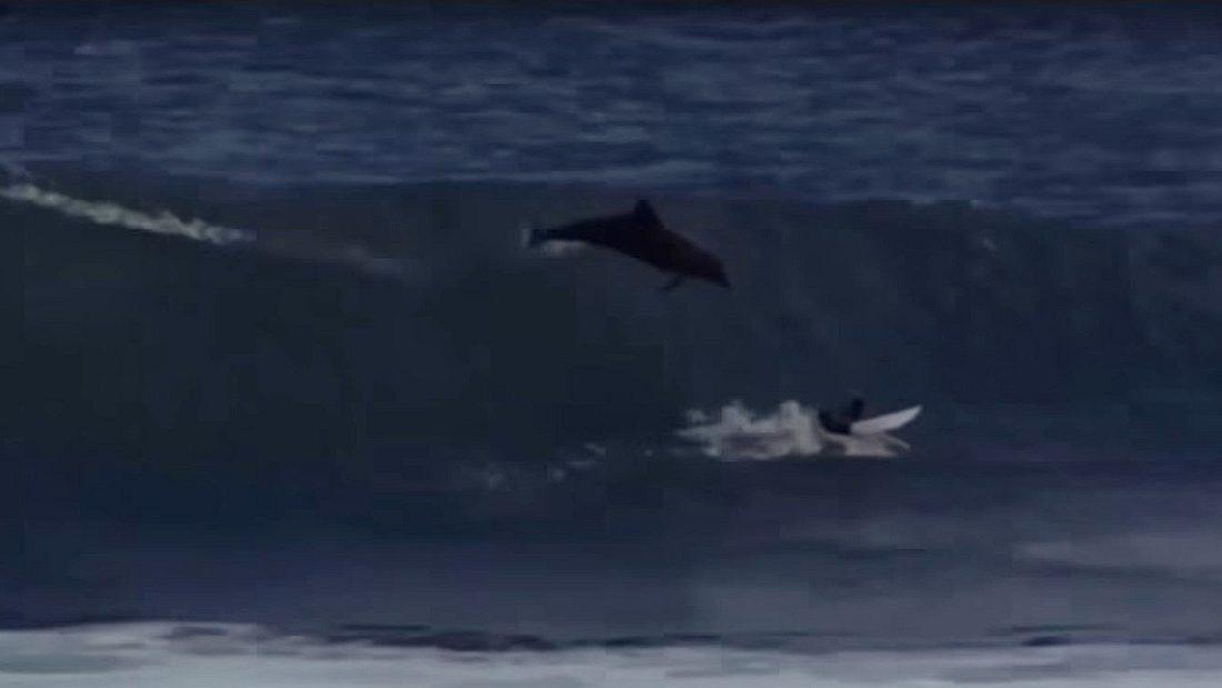 Dieser Surfer wurde versehentlich von einem Delfin attackiert
