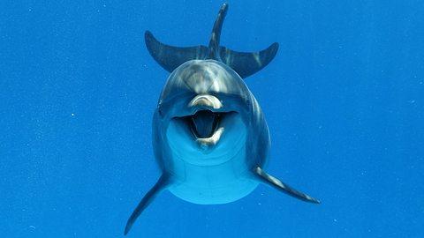 Blitzgeiler Meeressäuger terrorisiert Touristen - Behörde verhängt Badeverbot