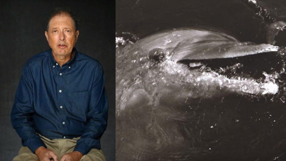 Dieser Mann hatte Sex mit einem Delphin - jetzt spricht er darüber