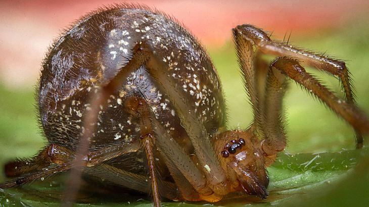 Giftspinnen sind in Deutschland auf dem Vormarsch