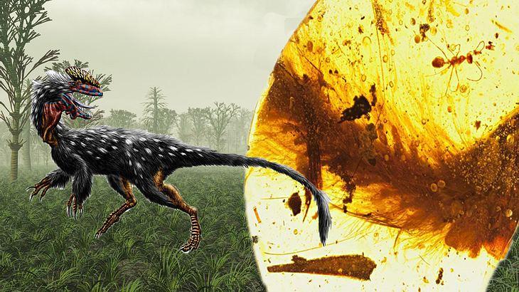 sensation dinosaurier schwanz  bernstein gefunden