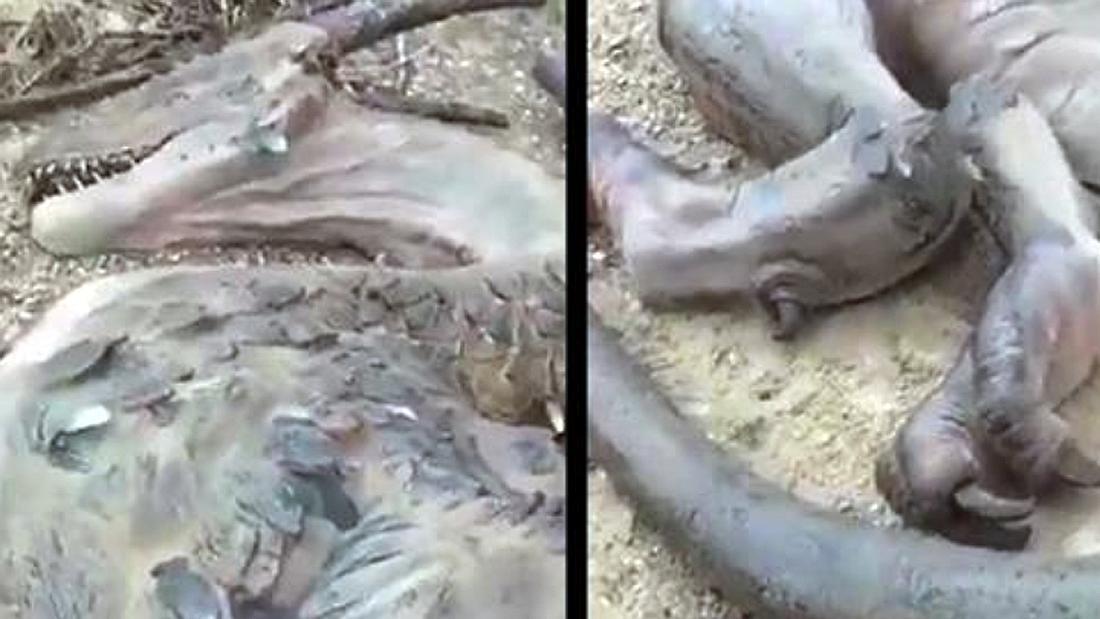 Ein mann behauptet, auf einer einsamen Insel einen toten Drachen gefunden zu haben
