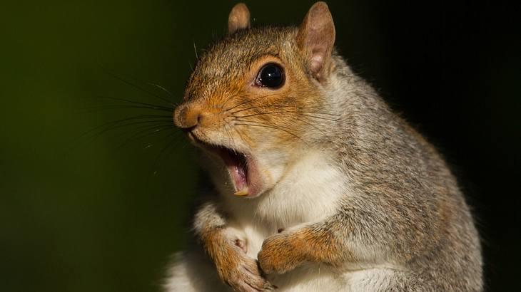 Männliche Arktis-Eichhörnchen sind fauler als ihre Weibchen