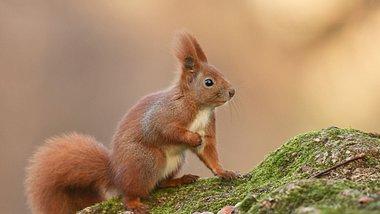 Extrem witzig: Eichhörnchen erleidet beim Füttern existenzielle Krise und erstarrt